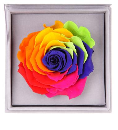 七彩玫瑰花语是什么 七彩玫瑰代表什么 七彩玫瑰花多少钱